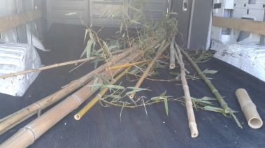 These are the bamboo. As I did not know exactly how much or what I needed, I gathered a variety of different kinds of bamboo, testing them out for suitability.